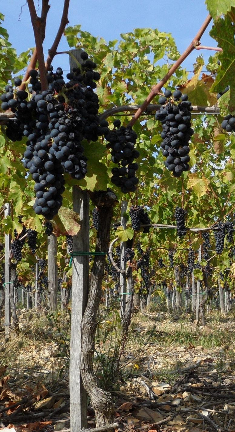 vitigno-monastero-frati-bianchi